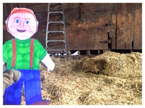 Flat Aggie helping us spread out square bales of straw to keep the cows warm.