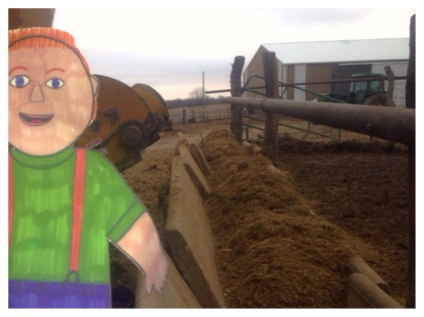 Flat Aggie helped us unload the wagon into one of the cow's feed bunks.  Their dinner is waiting when they get done milking.