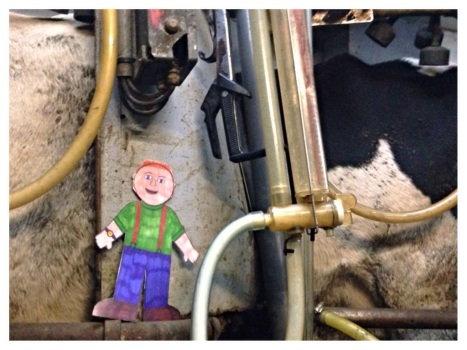 Flat Aggie was too small to help milk, so he kept an eye on this test - no cheating!