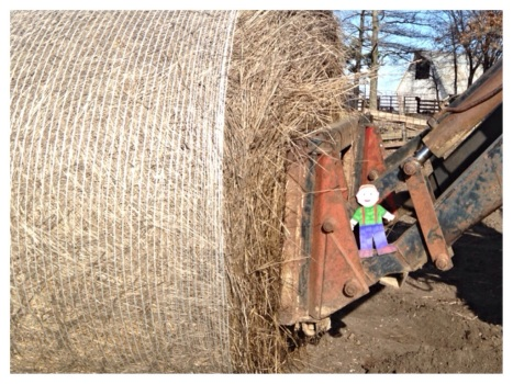 Safety First - we had to tell Flat Aggie he couldn't ride on the loader with the hay bale.